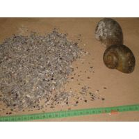 Crushed snail shells as poultry feed additive
