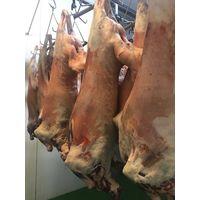Karakul sheep meat