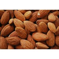 Raw bitter almond nuts for sale thumbnail image