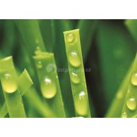 Multi-Purpose Synthetic Grass, MT-Peace thumbnail image