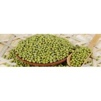 Providing Green Mung Bean (Red bean, soybean) with High Quality From China