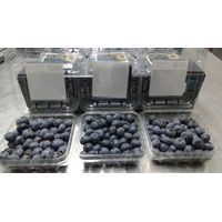 Blueberry Bilberry Huckleberry Fresh Fruits From Peru thumbnail image