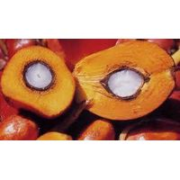 Crude palm oil & RBD palm oil