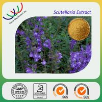 high quality natural scutellaria baicalensis extract