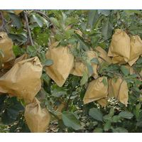 Fuji Apple growing paper bag, Fuji Apple protection paper bag, Fuji Apple packaging paper