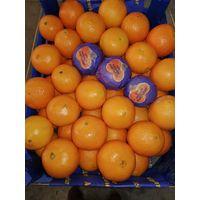 Citrus, Lemon, Mandarin, Orange, Grapefruit, Pomegranate, Apple, Apricot and Watermelon thumbnail image