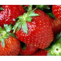 Fresh Berries thumbnail image