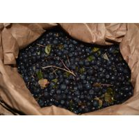 frozen bilberry (wild blueberry) semi-conventional product