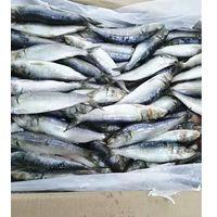 Top Selling Export Frozen Seafood Fish Sardine thumbnail image