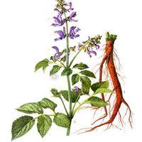 Scutellaria extract 85%Baicalin