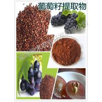 beverage ingredients grape seed opc 95%
