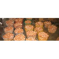 White / Brown Chicken Table Eggs In Trays an Cartons