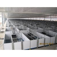 fhigh quality galvanized pipe pig farrowing crate