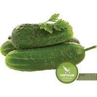 High Quality Fresh Cucumber Wholesale
