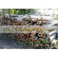 Teak Wood thumbnail image