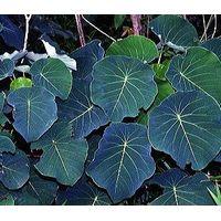 mamala plant extract thumbnail image