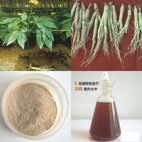 Huir GMP factory supply 80% Ginseng extract quality product Huir
