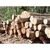 AZOBE  ROUND AND SQUARE LOGS,LUMBER AVAILABLE IN STOCK