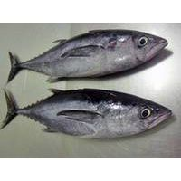 Frozen Big Eye Tuna Fish Export