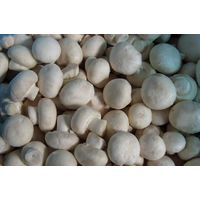 IQF mushroom whole&slice thumbnail image