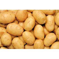 Fresh Potato thumbnail image