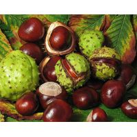 Horse Chest Nut Plant Extract