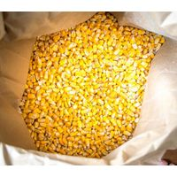 Best Wholesale price for Quality Yellow Corn for Sale thumbnail image