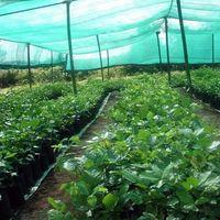 Warp knitted green sun shade net greenhouse shade net for farming