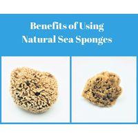 Wool Sea Sponge thumbnail image