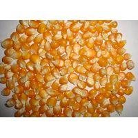 Yellow Corn (Animal Feed)