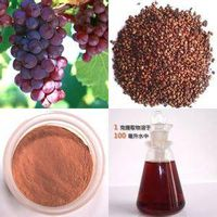 Factory Grape Seed Extract 95% Polyphenols-OPC thumbnail image