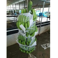 Plastic Banana Protecting Bag
