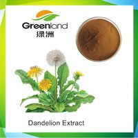 Pure Dandelion Root Extract Powder, Herba Taraxaci