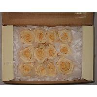 preserved rose head standard