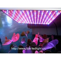 55w red blue led grow light for indoor plant growing (withCE&Rohs&FCC approved) thumbnail image