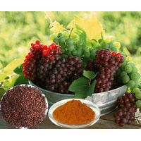 Grape seed extract, Proanthocyanidin 95%