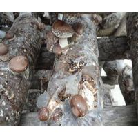 Frozen Mushroom Grow In Autumn thumbnail image