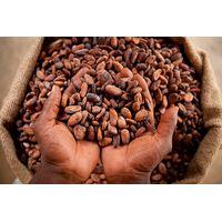 Cocoa Beans thumbnail image