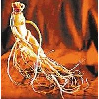 Ginsenosides 80% Panax Ginseng root