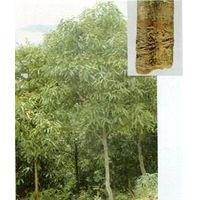 cinnamon bark P.E./extract;cinnamon;flavones20% ;polyphenols30% thumbnail image