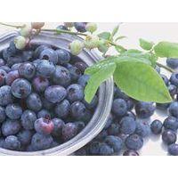 frozen blueberry IQF
