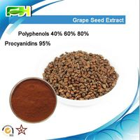 Factory Supply Grape Seed Extract Polyphenols & Procyanidins