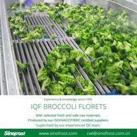 IQF Broccoli Florets/Frozen Broccoli/IQF Vegetables/Frozen Vegetables thumbnail image