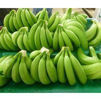 Fresh Green Cavendish Banana Best Quality.