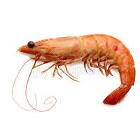 Shrimp|Prawns