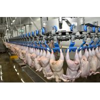 Halal Frozen Whole Chicken & Parts thumbnail image