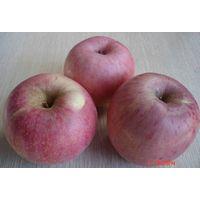 Red Qinguan Apple