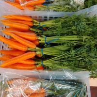 Carrots with Forelock