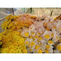 FLOWER, FRUIT,VEGETABLE, PEPPER, LEAF