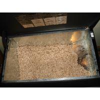 wood pellet Din Plus/wood briquettes/wood pellet fuel